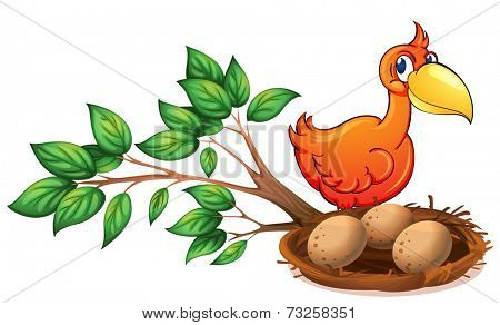 Illustration of an orange bird watching the eggs on a white background