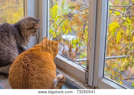 Cats Watch A Squirrel