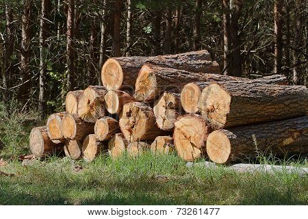 Bunch Of Felled Trees