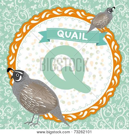 Abc Animals Q Is Quail. Childrens English Alphabet. Vector