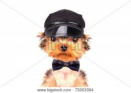 A dog wearing a cap and neck bow