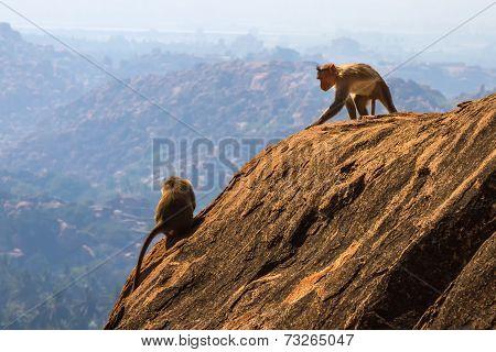 Monkeys In The Mountain