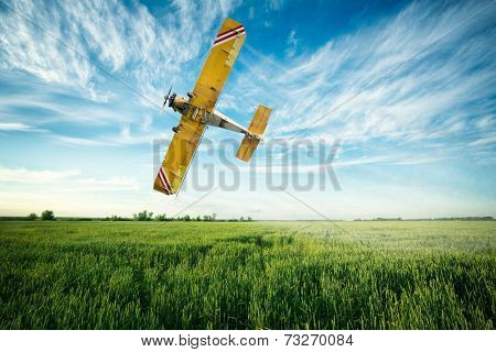 crop duster airplane flies low over a wheat field spraying fungicide and pesticide