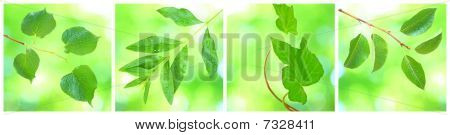 Collage of green leaves in spring