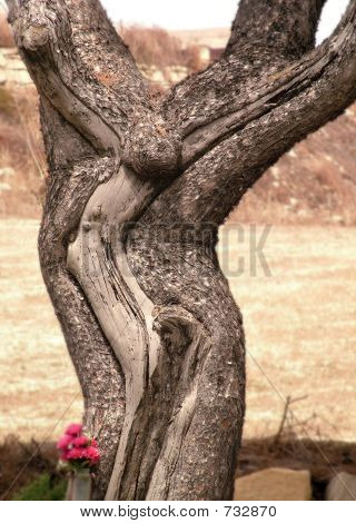 Crucifixion Tree Naturally Made