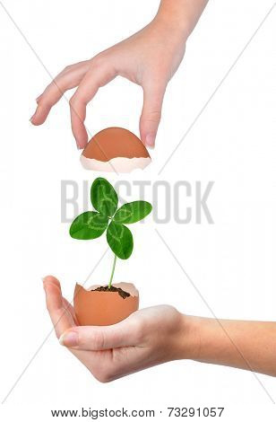 Hand holding clover growing out of the egg isolated on white.New life concept.