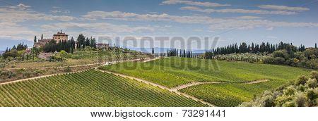 Panorama Of A Typical Tuscan Vineyard