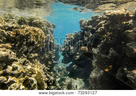 Coral Reef Under Water Of The Red Sea