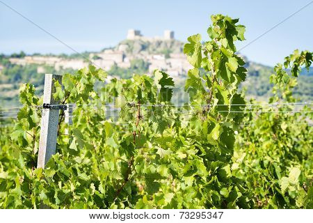 Grapevines Near Montemassi