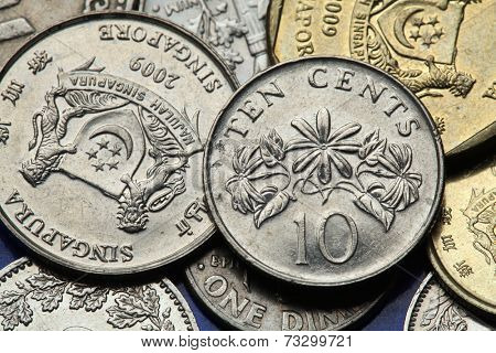 Coins of Singapore. Winter jasmine flower (Jasminum multiflorum) depicted in Singapore ten cents coin.
