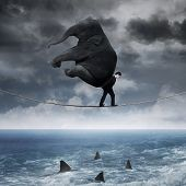 image of working animal  - Business person carrying an elephant and walk on the rope above sea - JPG