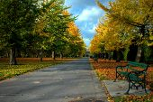 foto of bute  - bute park in cardiff with beautiful autumn colours of trees and bench - JPG