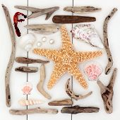 stock photo of driftwood  - Starfish and sea shell selection - JPG