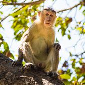 stock photo of marmosets  - Monkey sitting on the tree in jungle - JPG