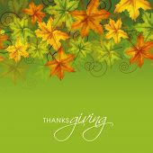 image of thanksgiving  - Colorful maples leaves on green background - JPG