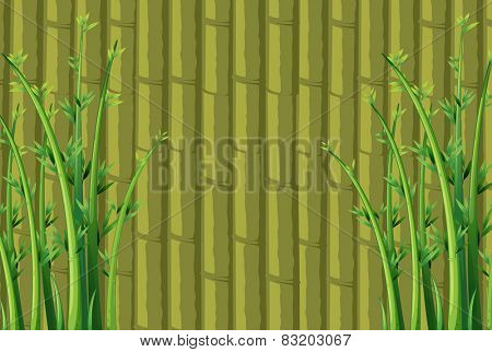 Illustration of a bamboo wall
