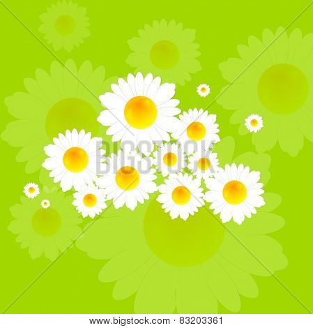 Bright summer background with camomile flowers. Vector design