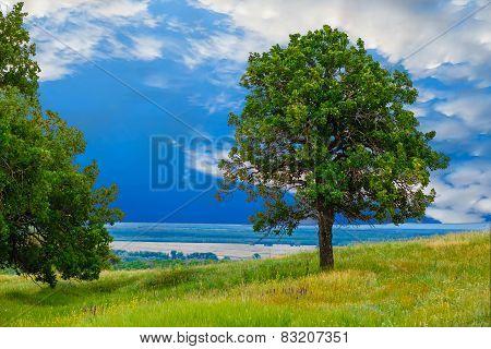 green sky tree oak field landscape grass nature