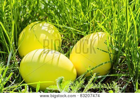 Yellow Easter Eggs In Green Grass, Closeup