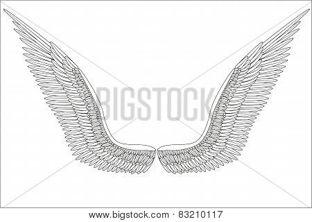 Sketch open angel wings. Vector.