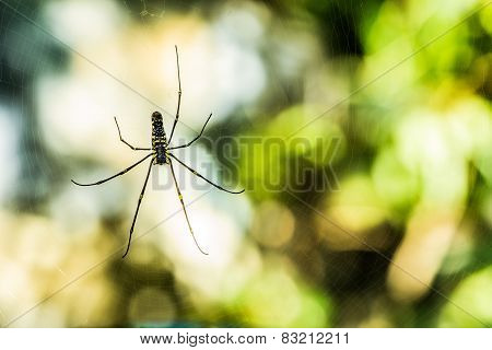 Spider with Defocus Background