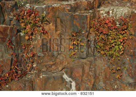 Colorful Rock and Vines