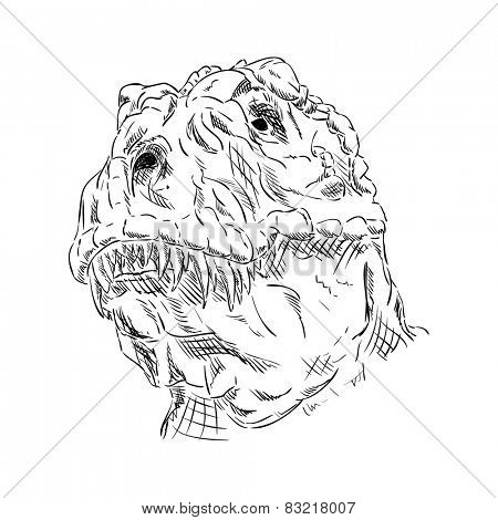 vector - contour head dinosaur isolated on background