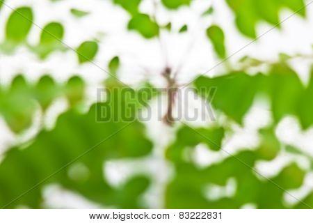 Green Nature Leaf Background