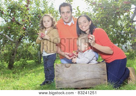 A happy family of four attractive caucasian catch apple on a fie