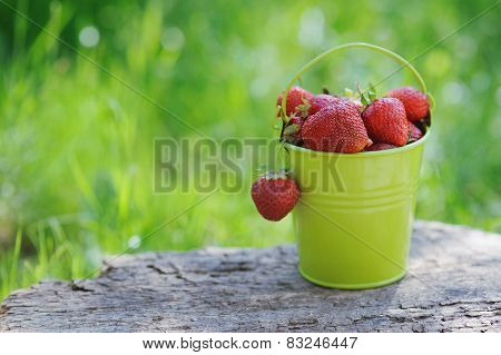 A Pail Full Of Freshly Picked Strawberries