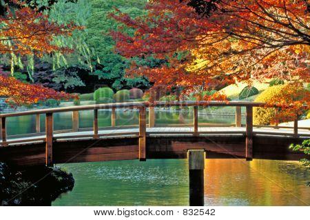 Jardín de clásico japonés Tokio, Japón