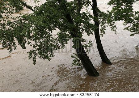 PRAGUE, CZECH REPUBLIC - JUNE 2, 2013: Tree partially flooded by the swollen Vltava River in Prague, Czech Republic.