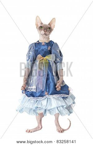 Hairless Don Sphinx Cat Dressed As A Doll