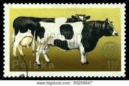 Vintage  Postage Stamp. Cattie.