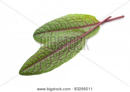 Leaves of red vein sorrel isolated on white
