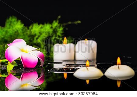 Plumeria Flower, Green Branch With Drops And Candles On Zen Basalt Stones In Reflection Water, Beaut