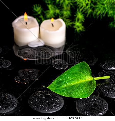 Beautiful Spa Still Life Of Green Leaf Calla Lily, Twig And Candles On Zen Basalt Stones With Dew In