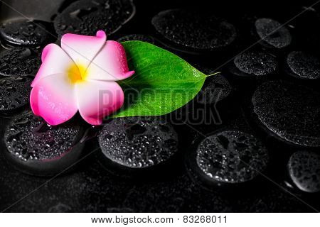 Beautiful Spa Background Of Green Leaf Calla Lily, Plumeria With Drops On Zen Stones In Water, Close