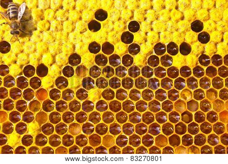 Bee, Honey, Nectar And Pollen