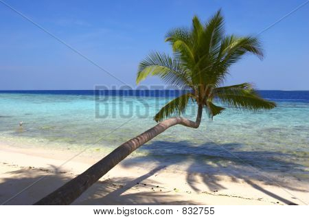 CHARMING BEACH  WITH PALM TREES AND BIRD