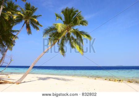 schönen Strand mit Palmen