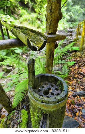 Natural source of water in a forest