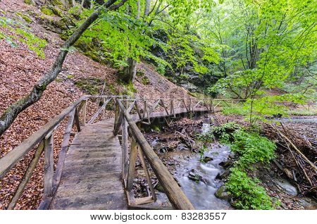 Wooden bridge above small river in a forest