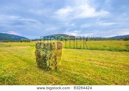 Harvest field and straw bales