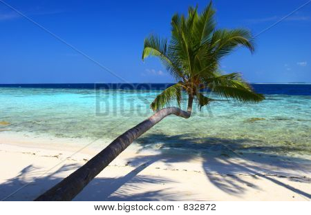 ATTRACTIVE BEACH WITH PALM TREE