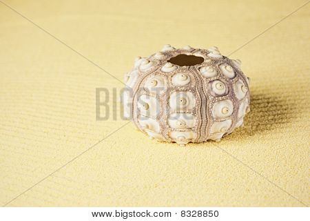 Exoskeleton Of Sea Urchin On Sand