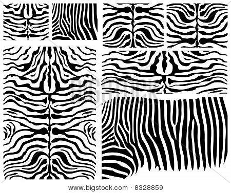 Zebra Skins