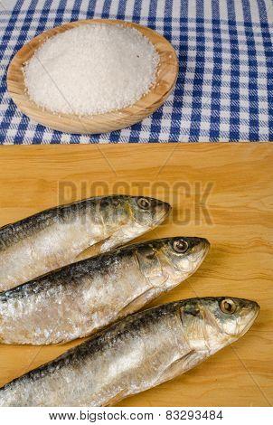Salt Preserved Sardines
