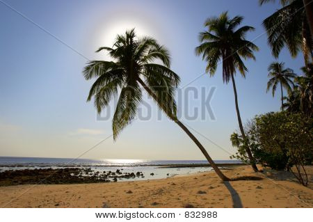 SUPERIOR MORNING BEACH WITH PALM TREES