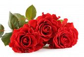 pic of wonderful  - Bouquet of wonderful red roses isolated on white - JPG
